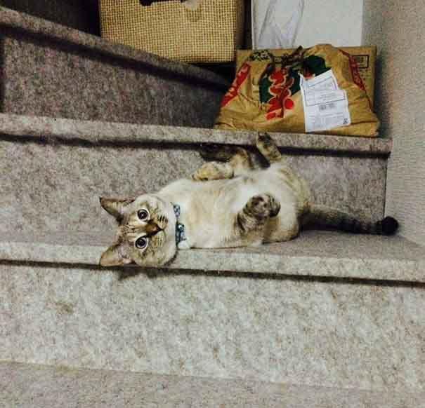 แมวหลงทาง