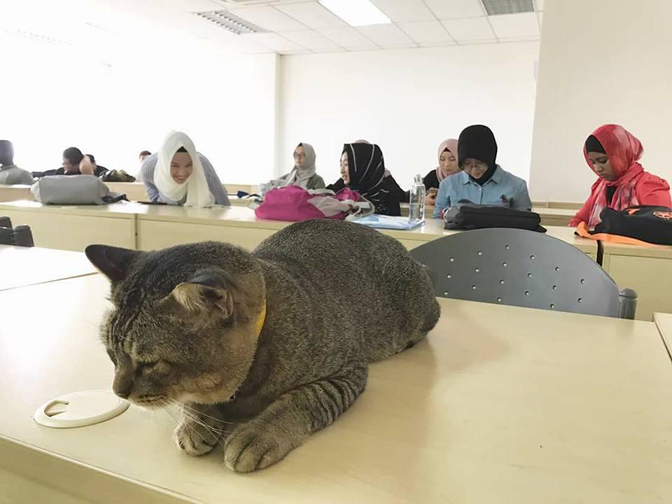 แมวติดรียน