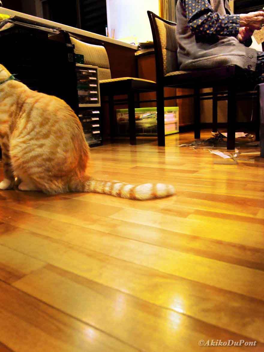 แมวกับตา